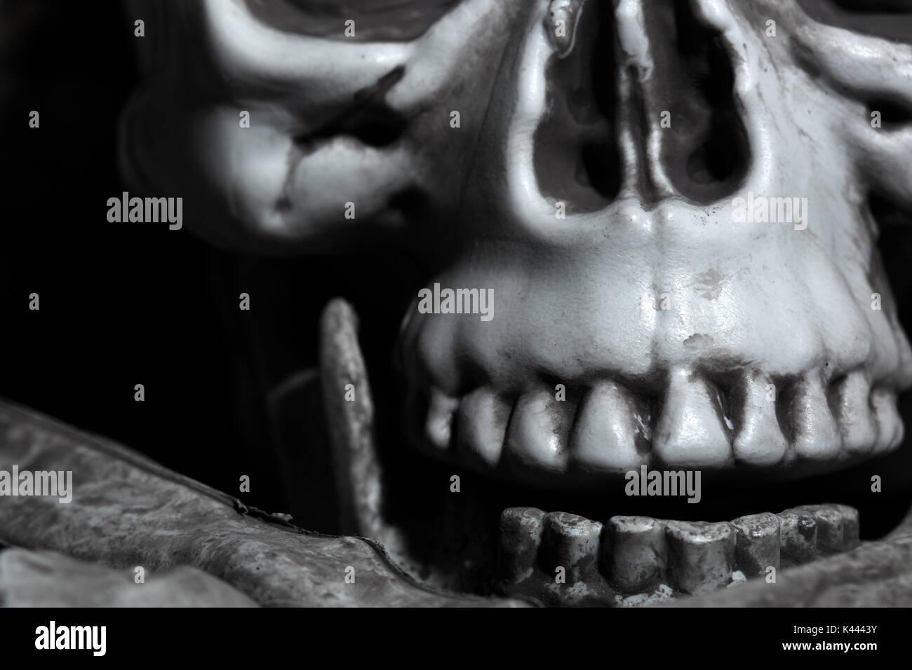 Close-up horizontal photo of the human skull Stock Photo