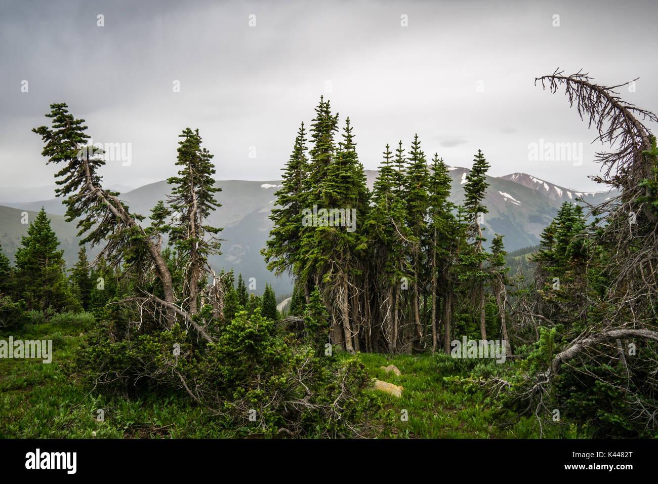 Alpine Tree Line Stock Photos Alpine Tree Line Stock Images Alamy