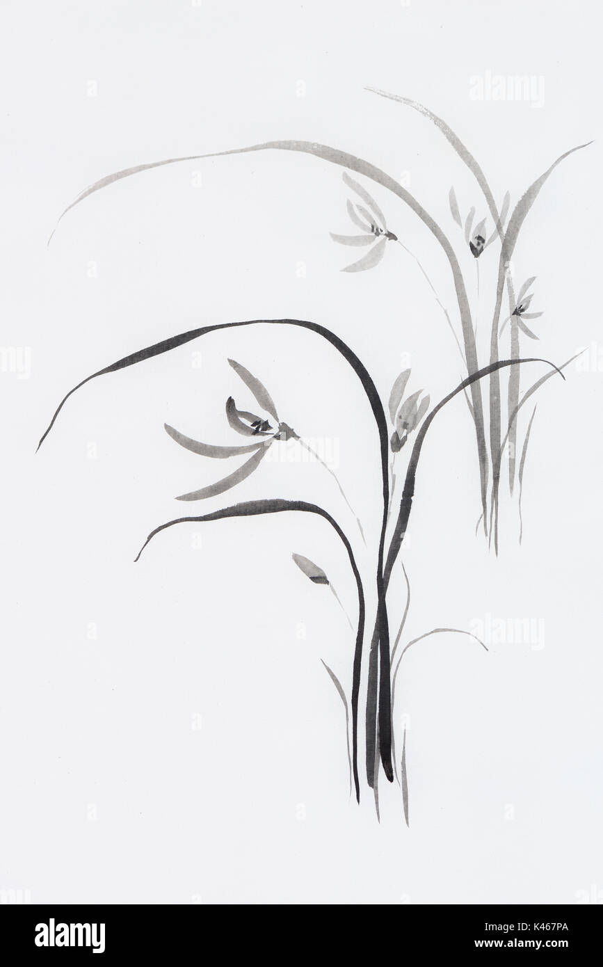 Wild orchids, orchid flowers, Japanese Sumi-e Zen black ink painting on rice paper illustration fine artwork - Stock Image