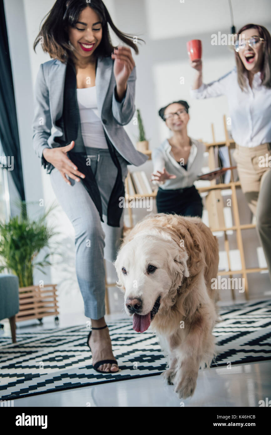 Cheerful young businesswomen playing with golden retriever dog in modern office - Stock Image