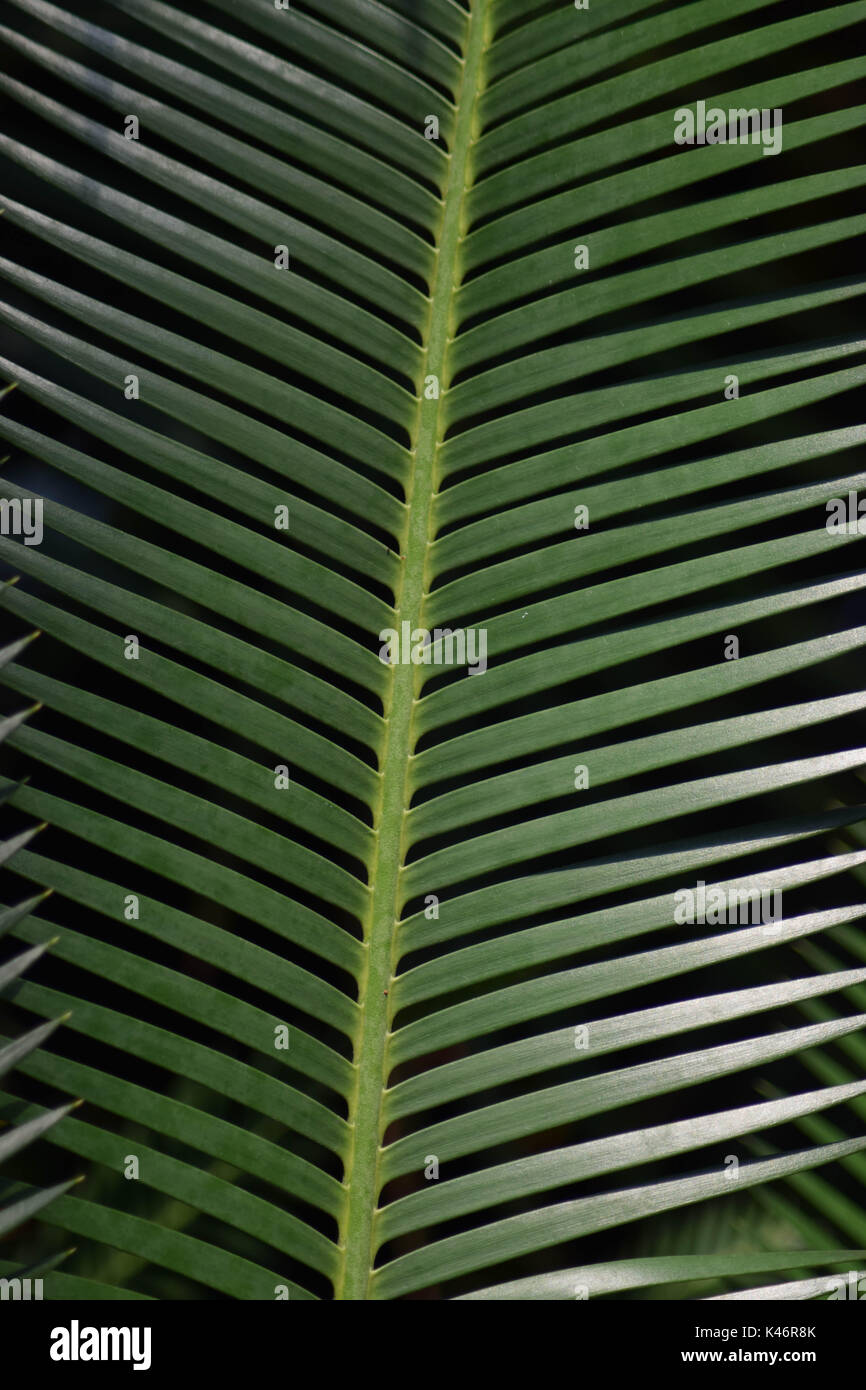 Pointy, Green Leaves - Stock Image