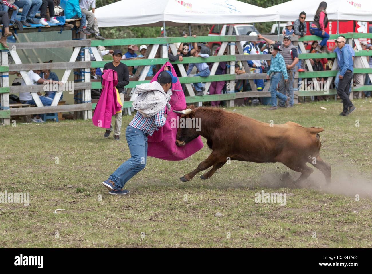 May 28, 2017 Sangolqui, Ecuador: man holding up a cape charged by a bull at a rural amateur bullfight in the Andes Stock Photo