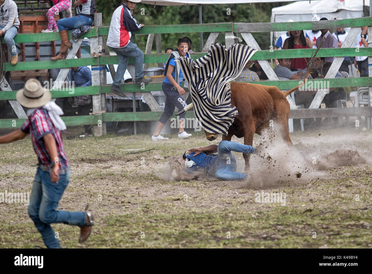May 28, 2017 Sangolqui, Ecuador: young man ran over by a bull at a rural amateur rodeo in the Andes Stock Photo