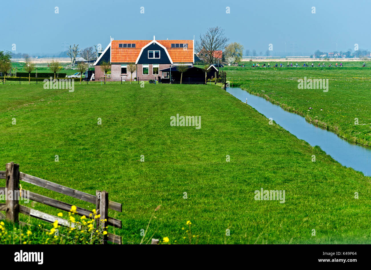 Flat Landscape With Farm House, Waterland Region, Netherlands - Stock Image