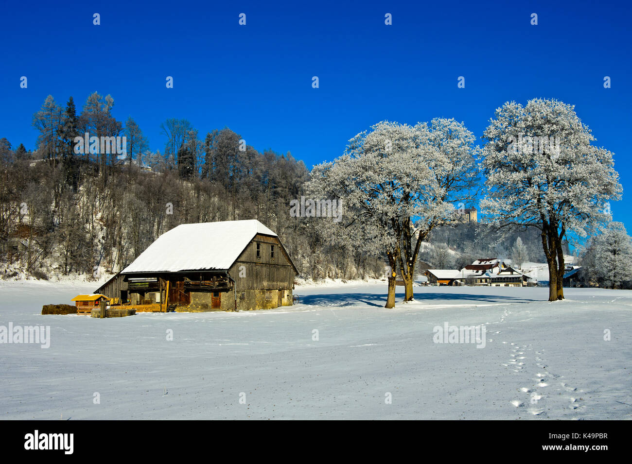 Frosty Trees And Farm Building On A Cold Winter Day In The La Gruyere Region, Gruyeres, Switzerland - Stock Image