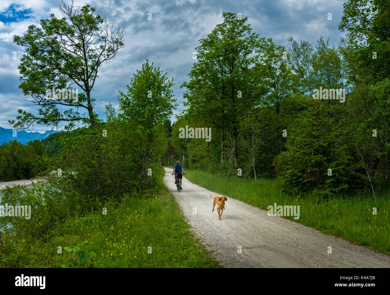 Tour With Dog - Stock Image