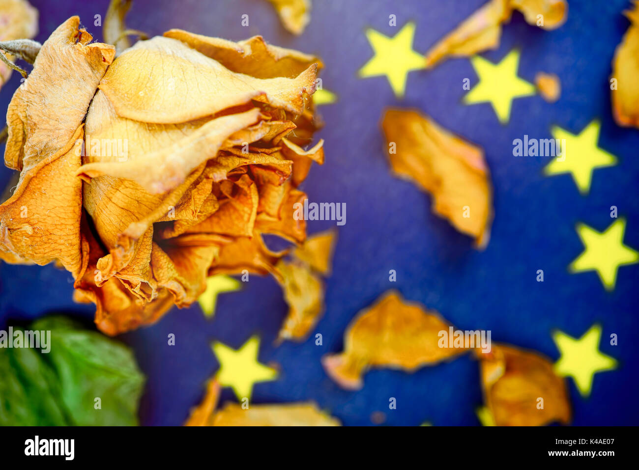 Withered Rose On A Flag Of Europe, Eu Disintegration - Stock Image
