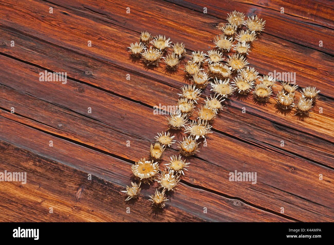 Kreuz Aus Silberdisteln Gefertigt - Stock Image