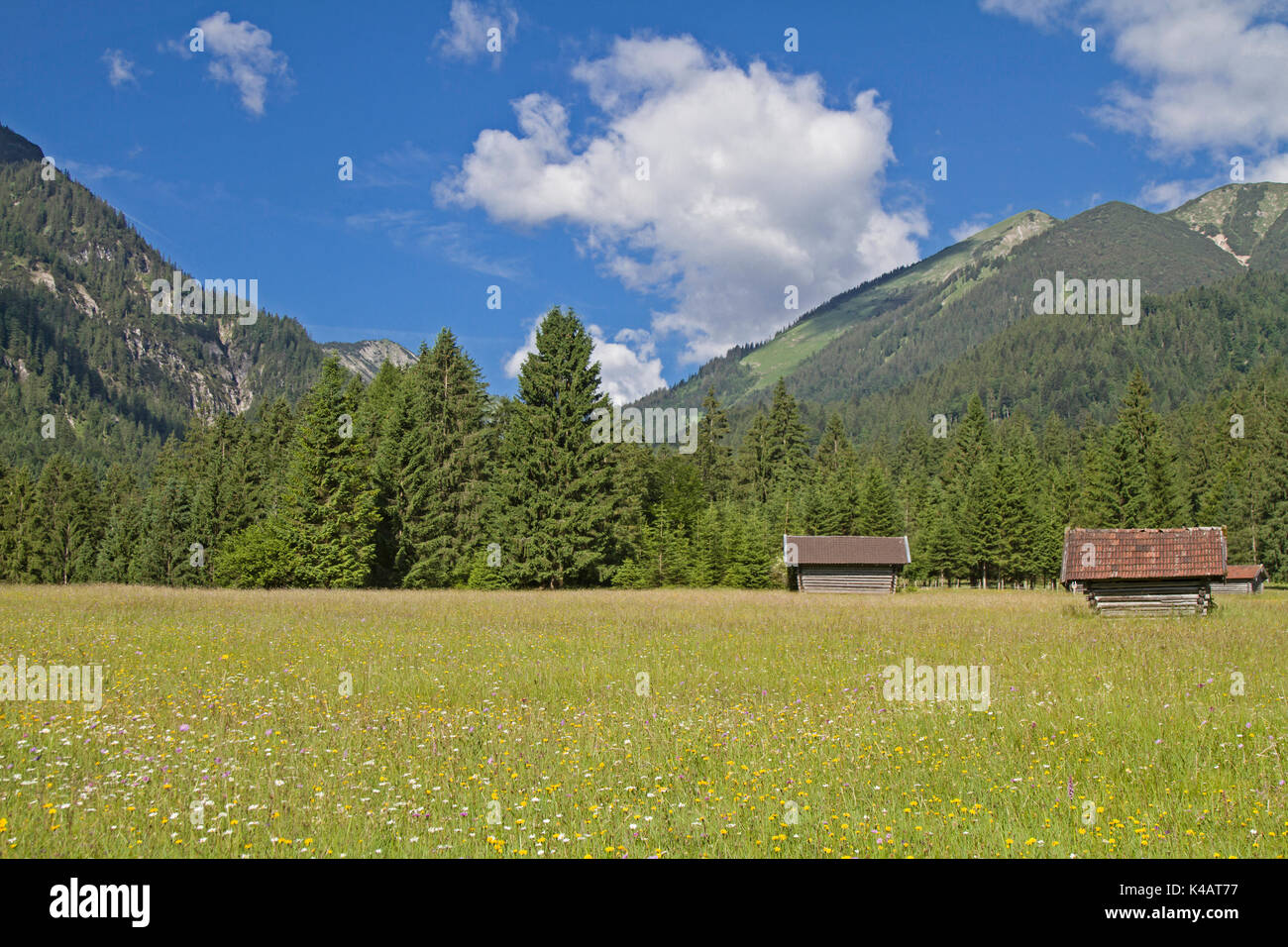 During The Ascent To Enningalm In The Ammergau Alps The Walkers Will Pass At This Wonderful Pastureland - Stock Image