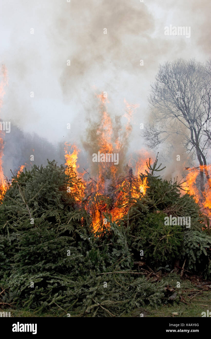 Burning Trees With Blazing Fire - Stock Image