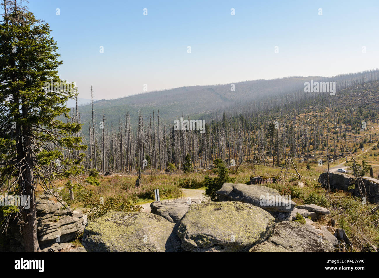 Death Of The Forests As A Result Of Pollution At Dreisesselberg, Nature Reserve Stock Photo