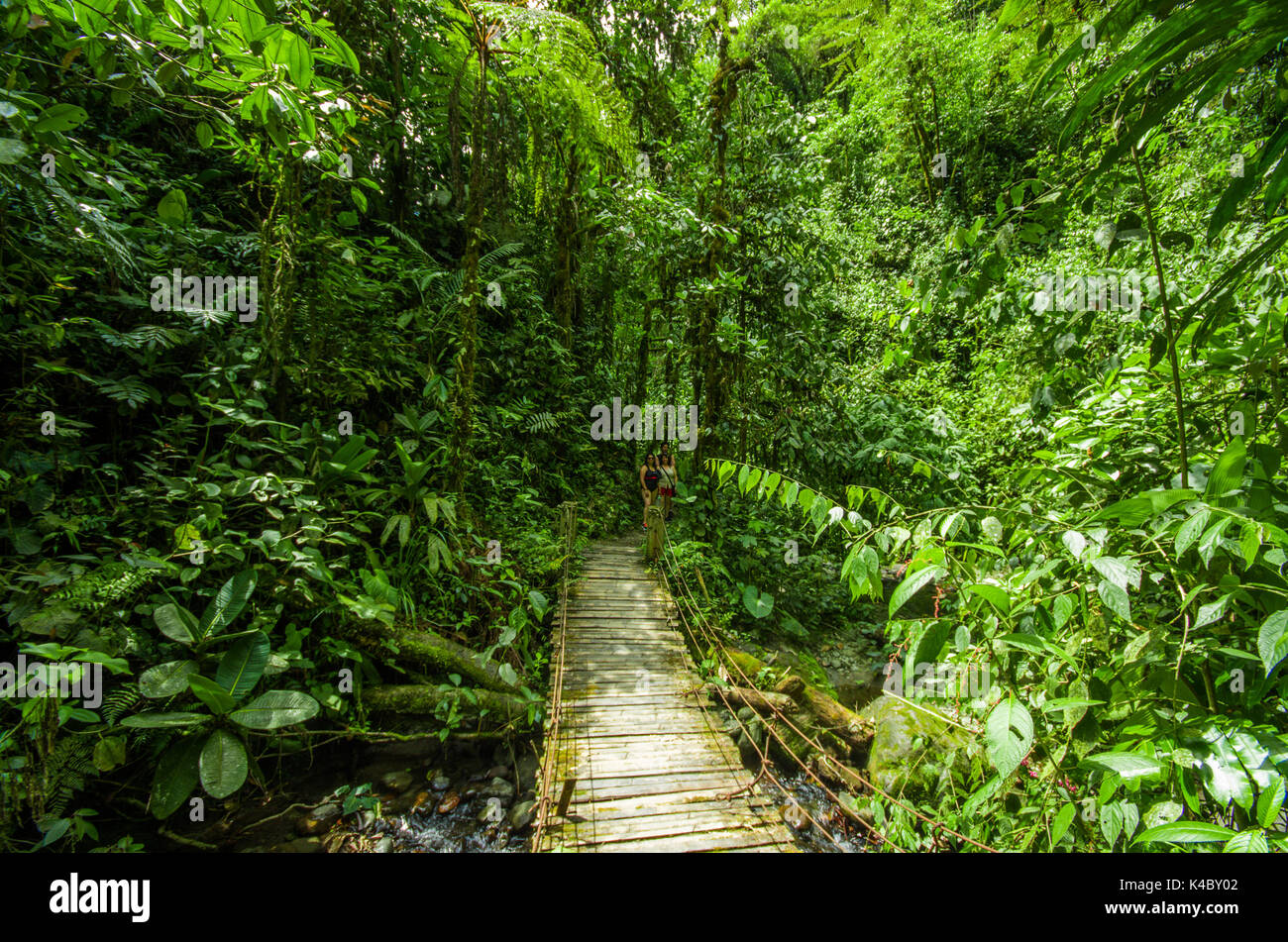 Beautiful Wooden Bridge In Hill Rain Forest With Moisture Plant Located Mindo