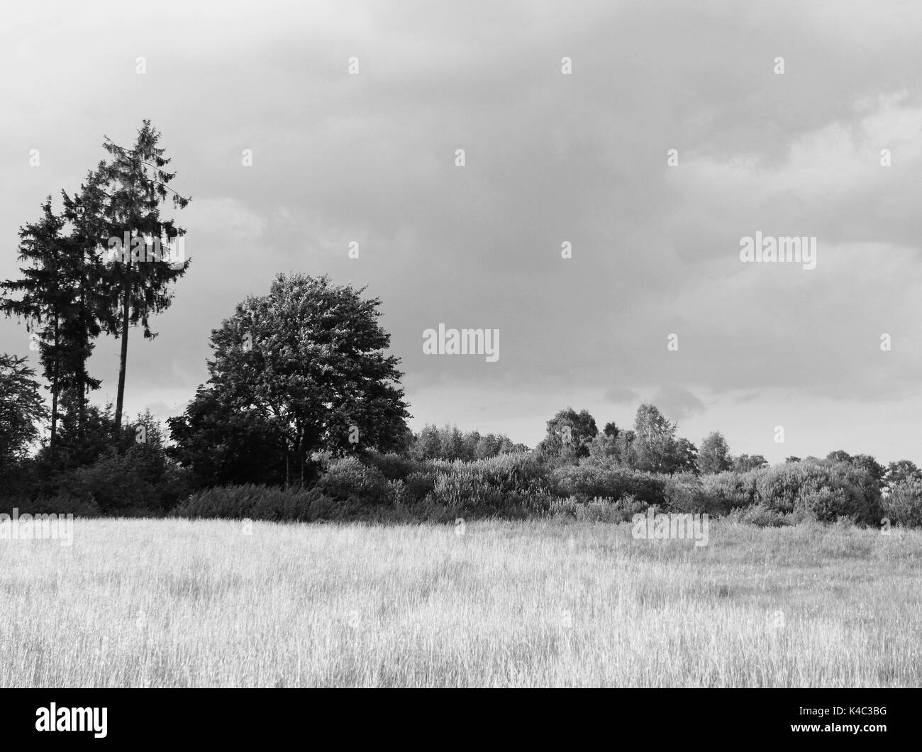 Ampermoss, River Valley Fen Near Ammersee In Upper Bavaria - Stock Image