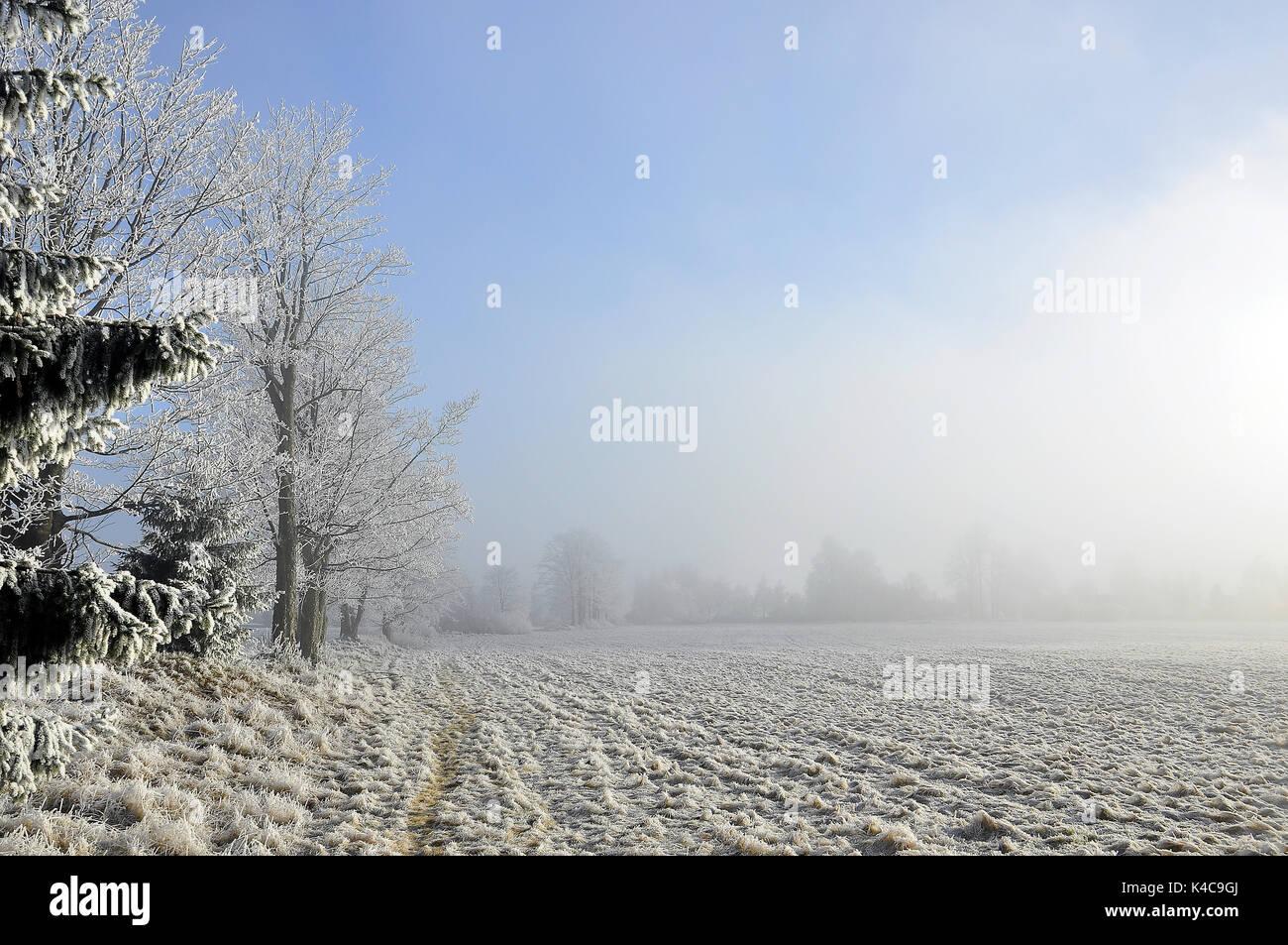Waldrand Im Winter Im Dunst - Stock Image