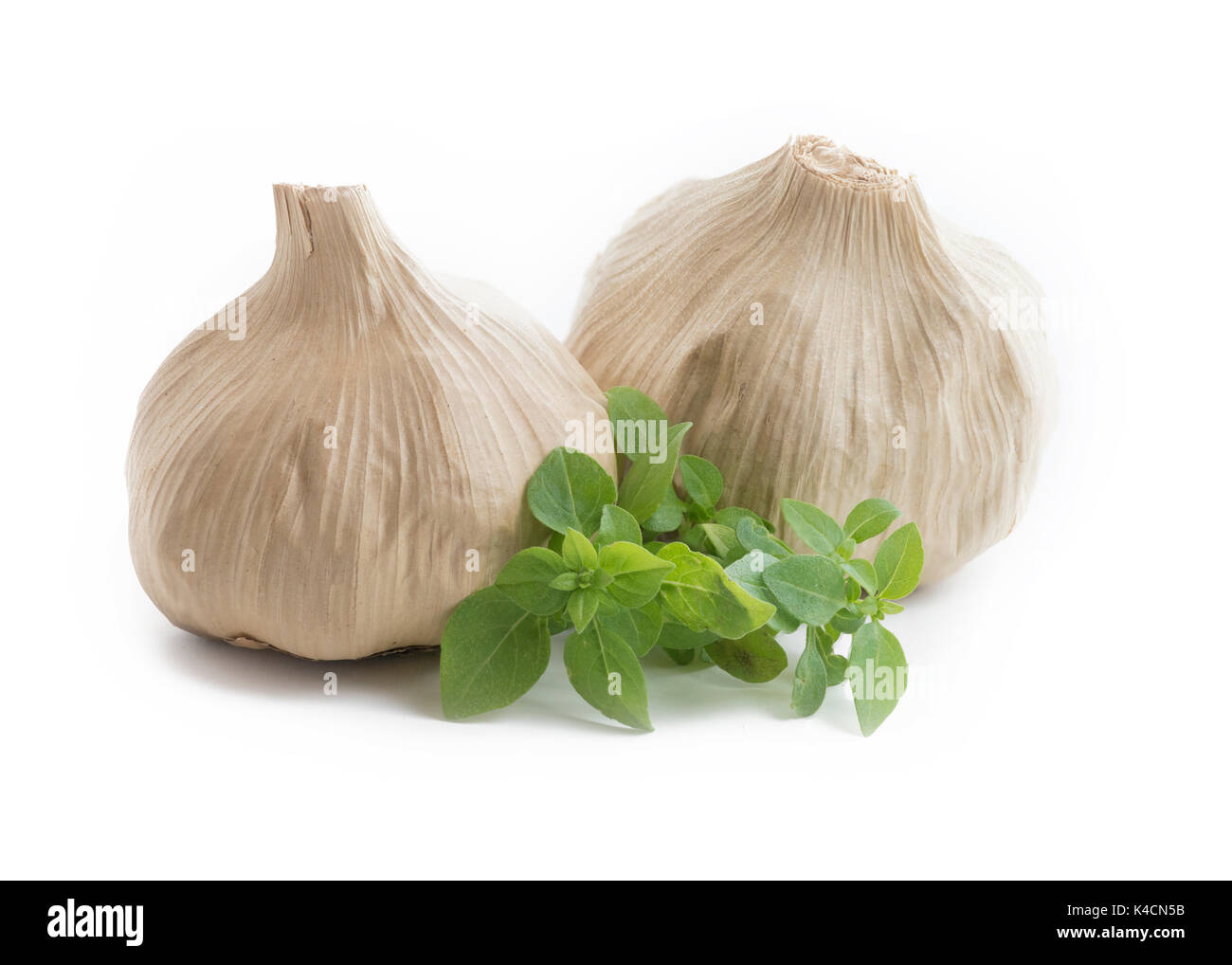 Whole bulb of home fermented Black Garlic latest wonder food ,rich in antioxidants, vitamins and minerals. Isolated on white background with greenery - Stock Image