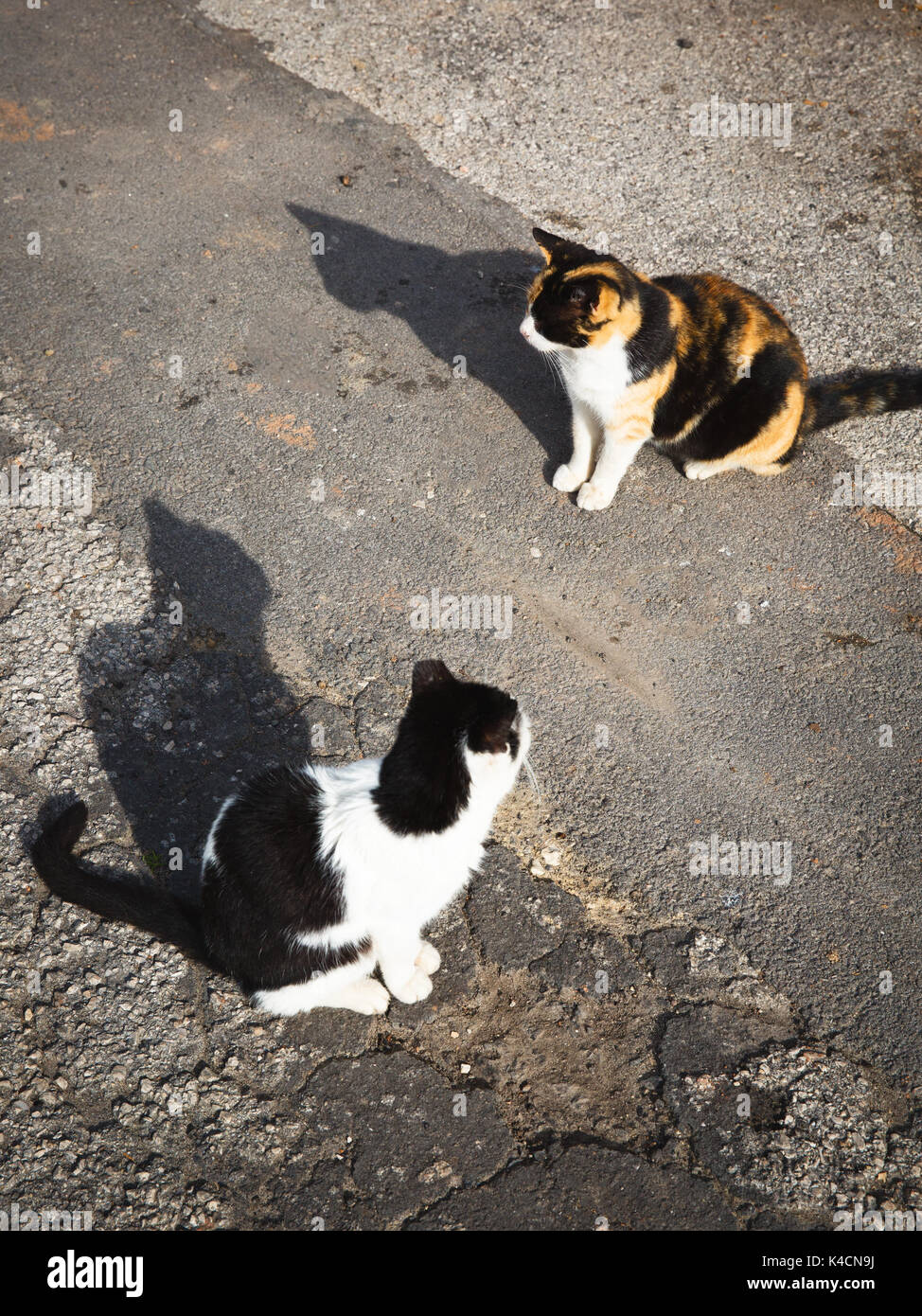 2 Cats In Sunlight - Stock Image