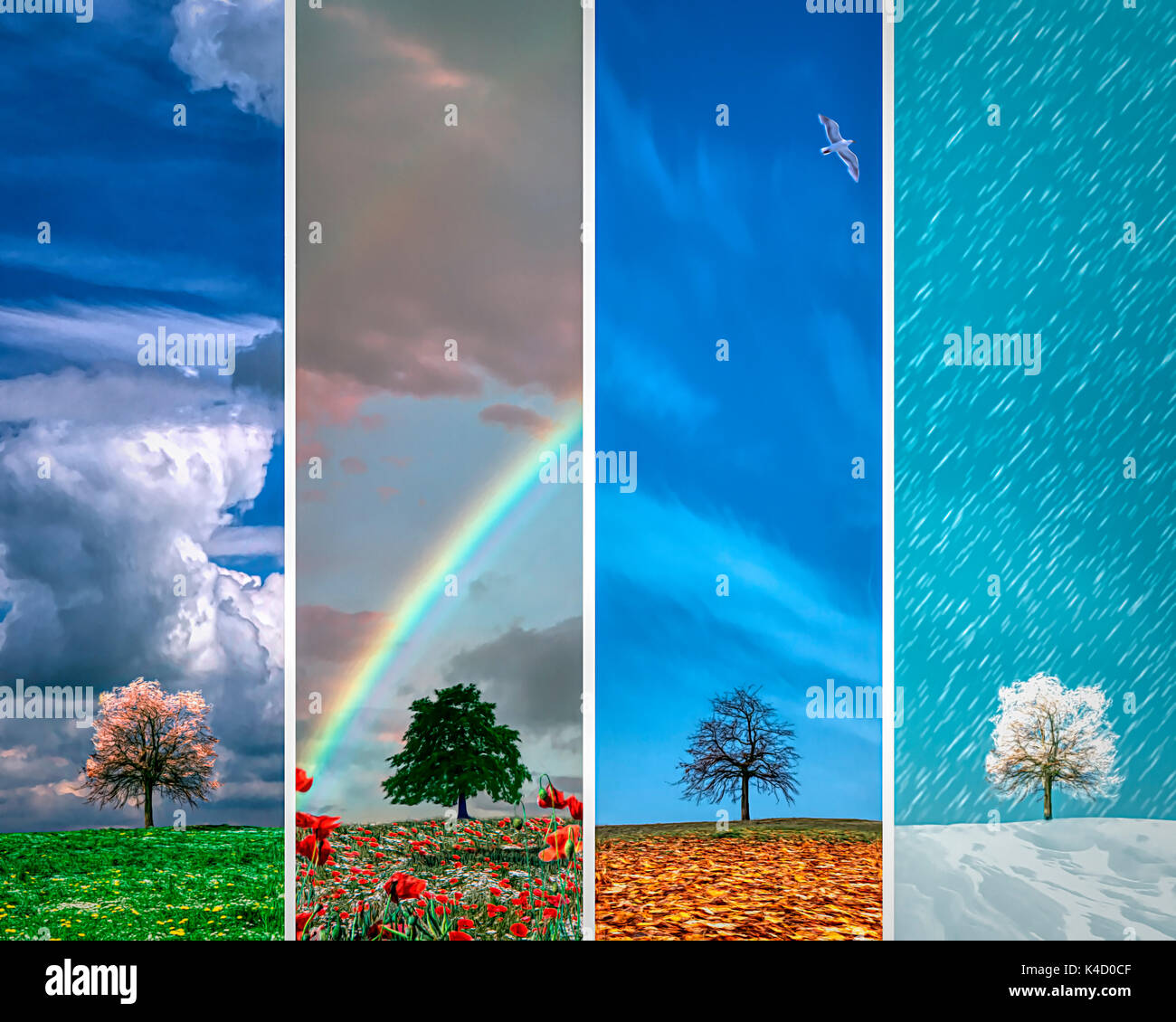 FOUR SEASONS: Combination of Spring, Summer, Autumn and Winter - Stock Image