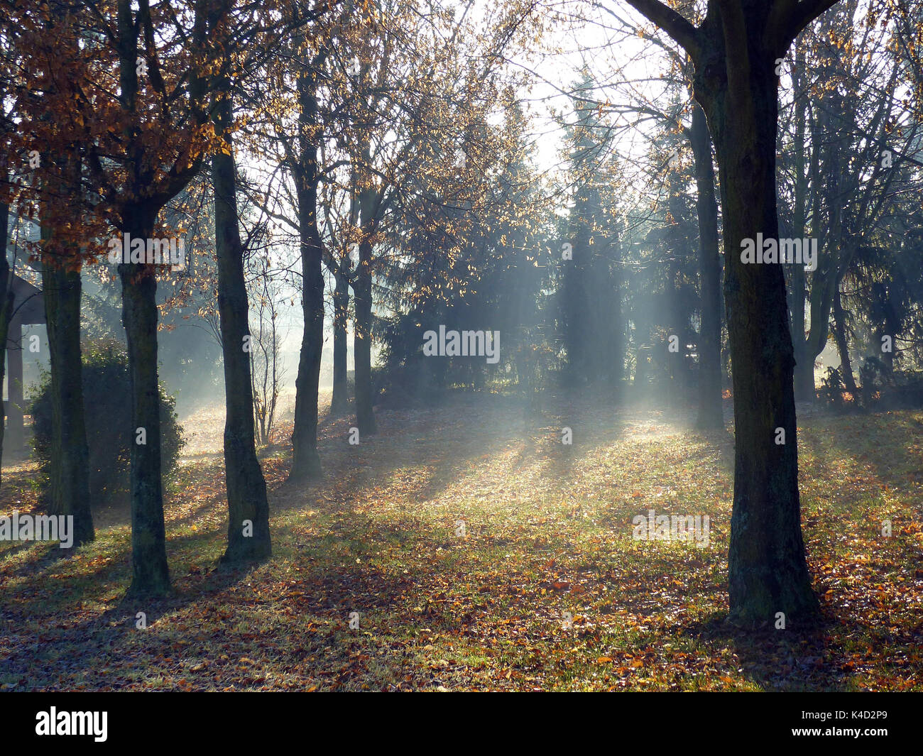 Sun Shines Through Some Trees In A Park - Stock Image