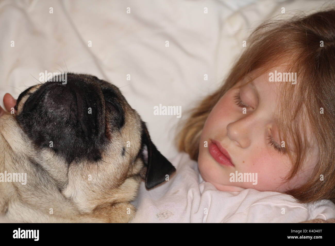Dog Sleeping In The Bed Of A Child - Stock Image