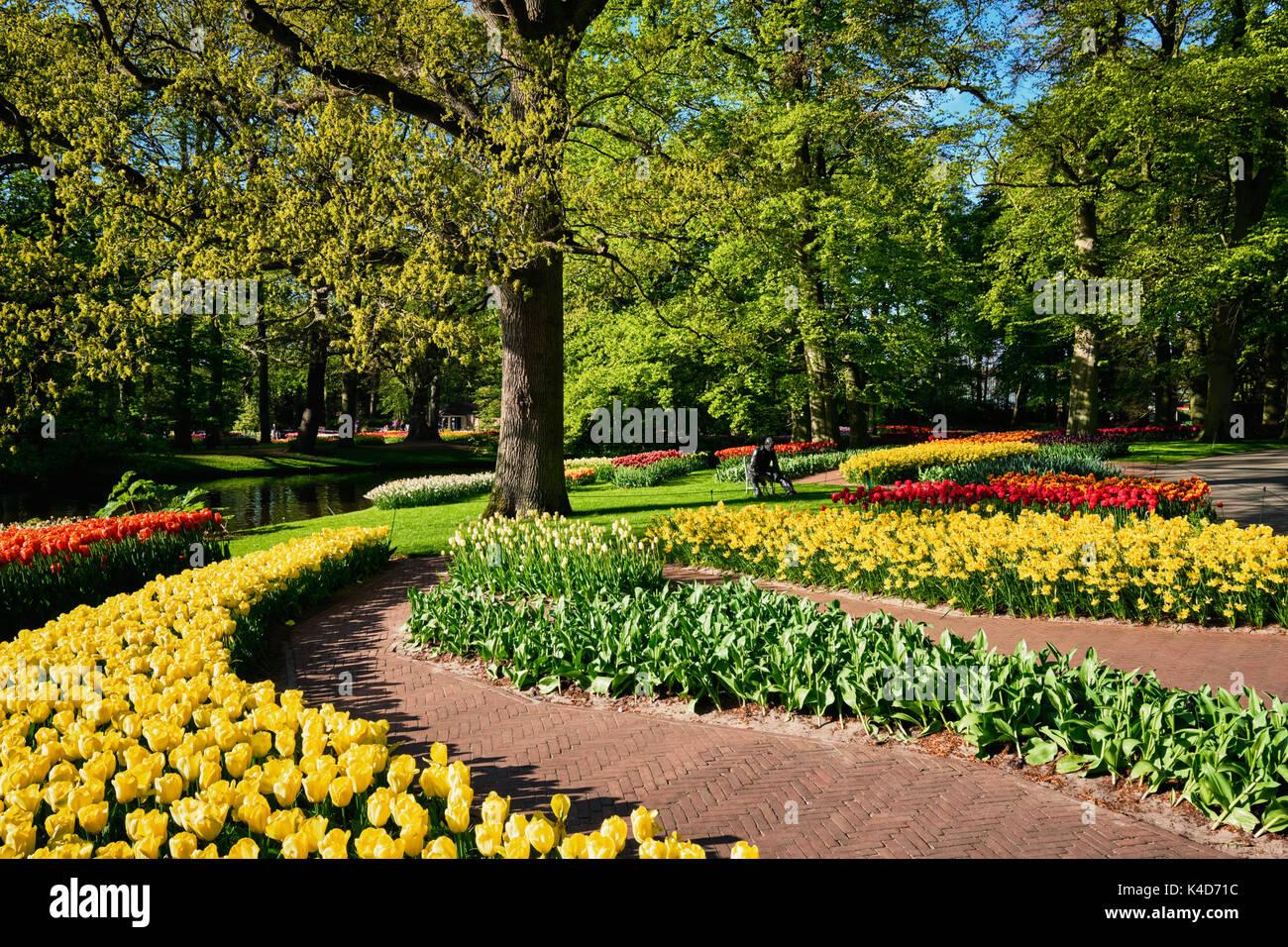 Blooming tulips flowerbeds in Keukenhof flower garden, Netherlan - Stock Image