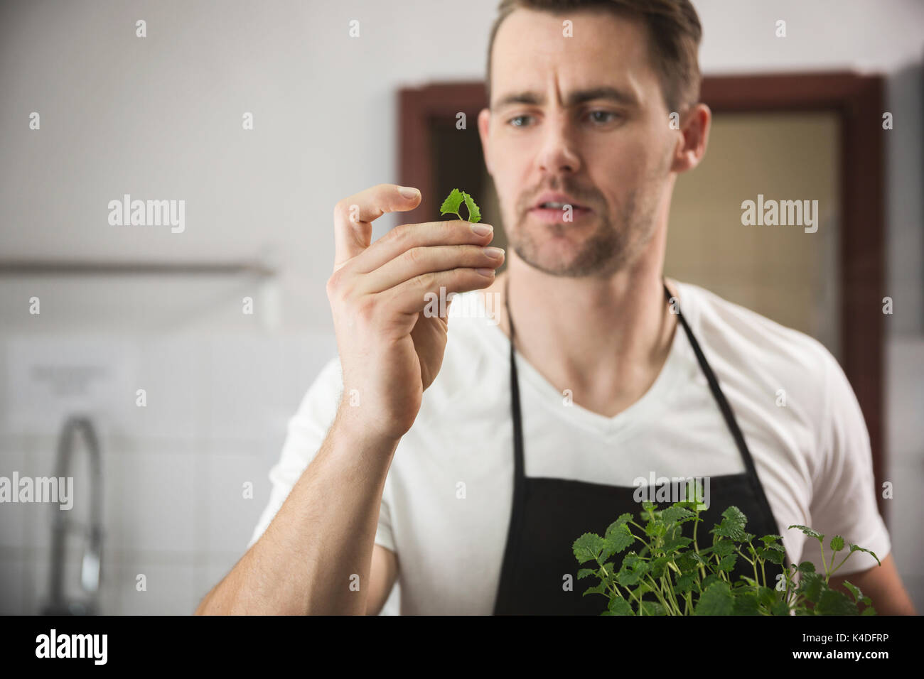 Front portrait of chef looking at small piece of lemon balm in kitchen - Stock Image