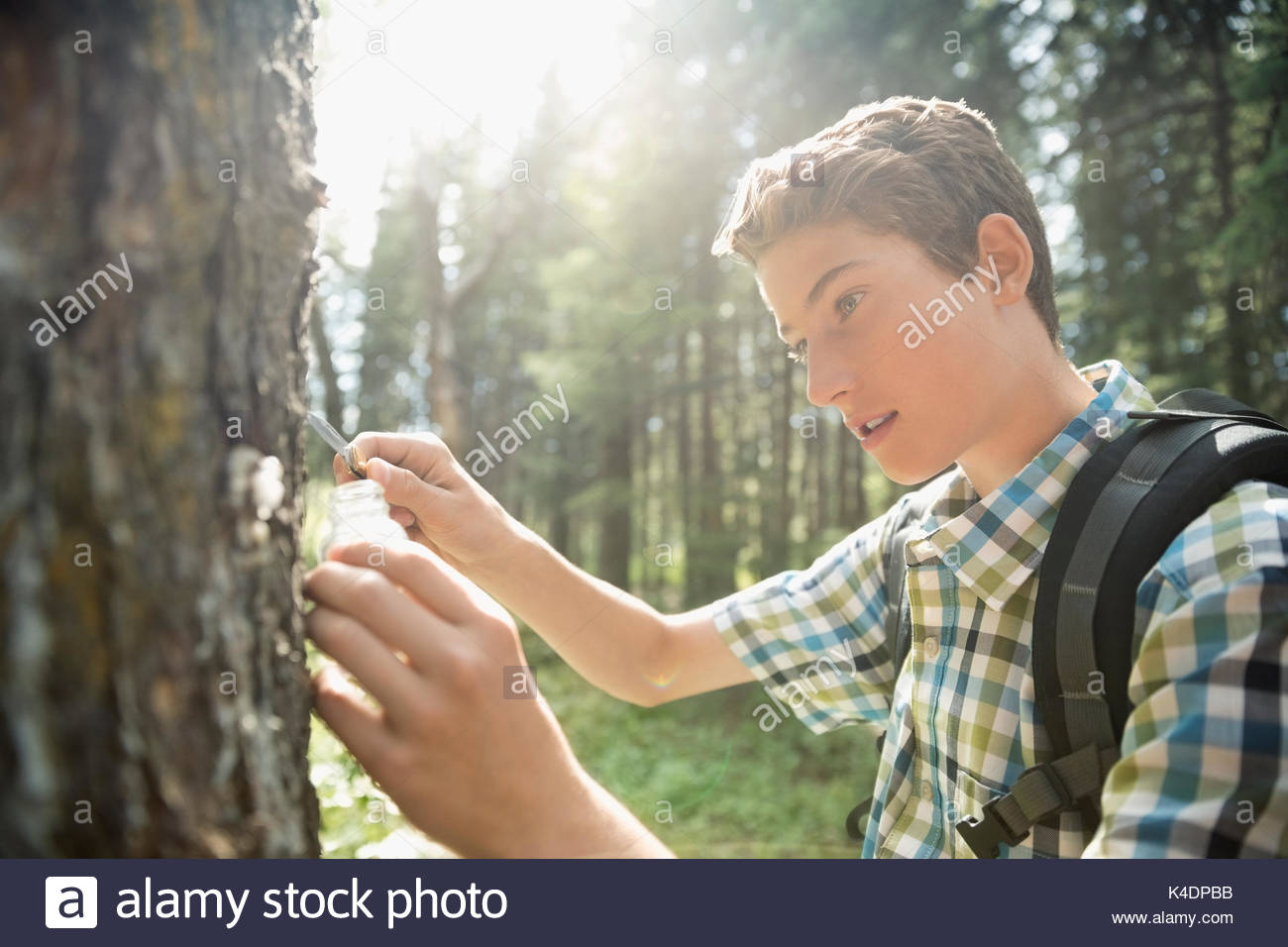 Teenage boy outdoor school student collecting bark specimen in jar, hiking in sunny woods - Stock Image