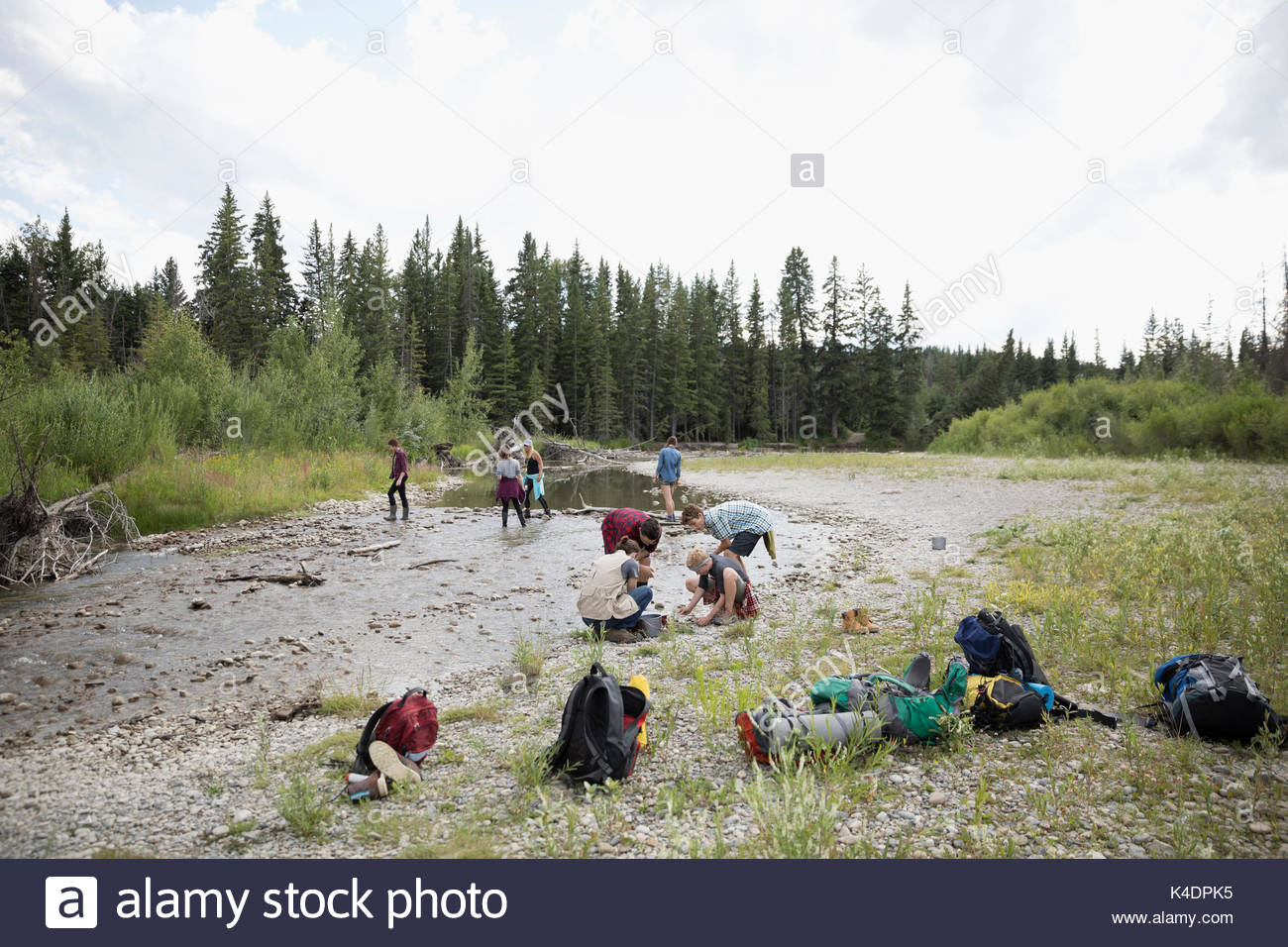 Teenage outdoor school students collecting samples at stream in woods Stock Photo