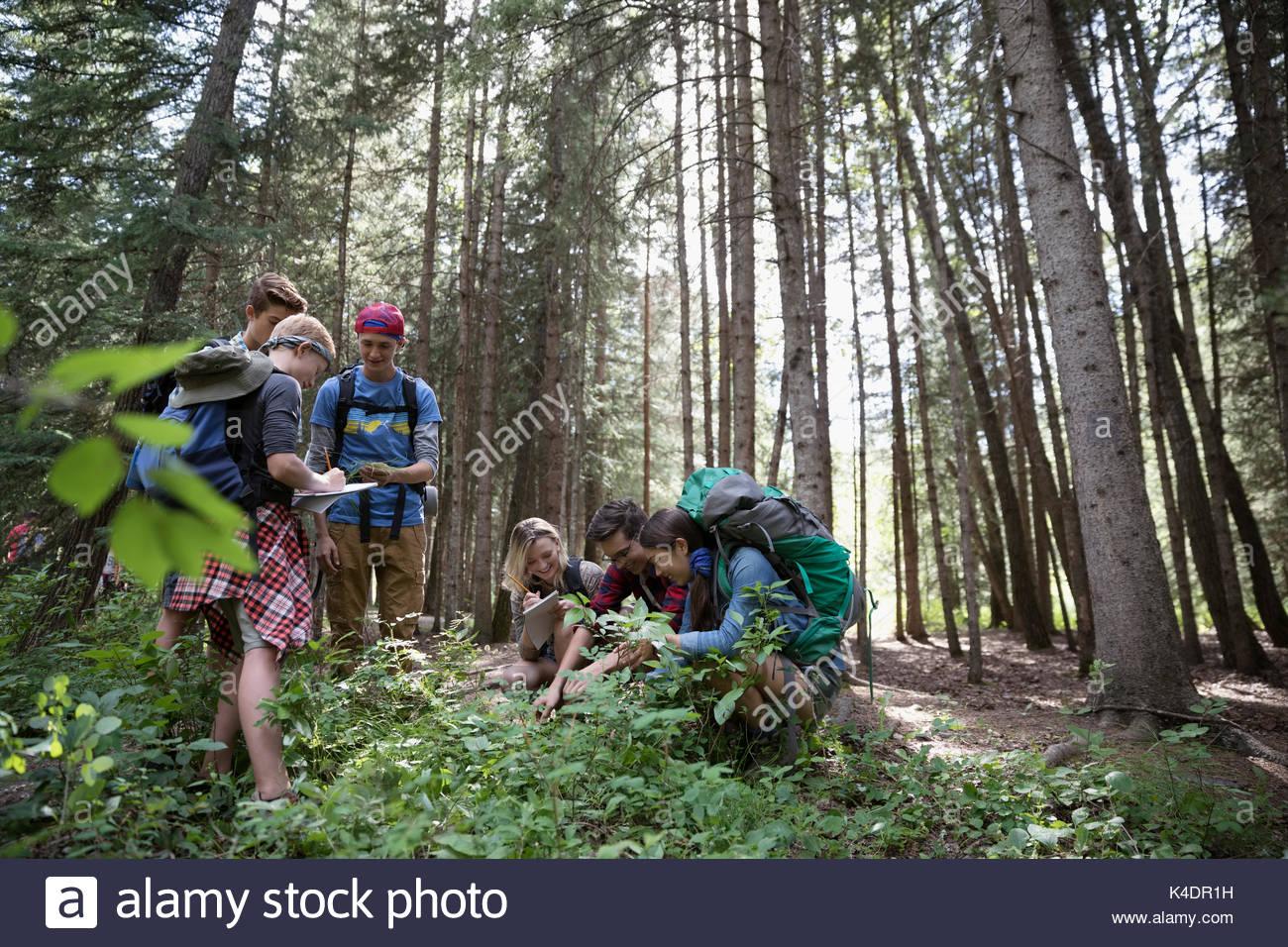Teenage outdoor school students exploring undergrowth in woods Stock Photo