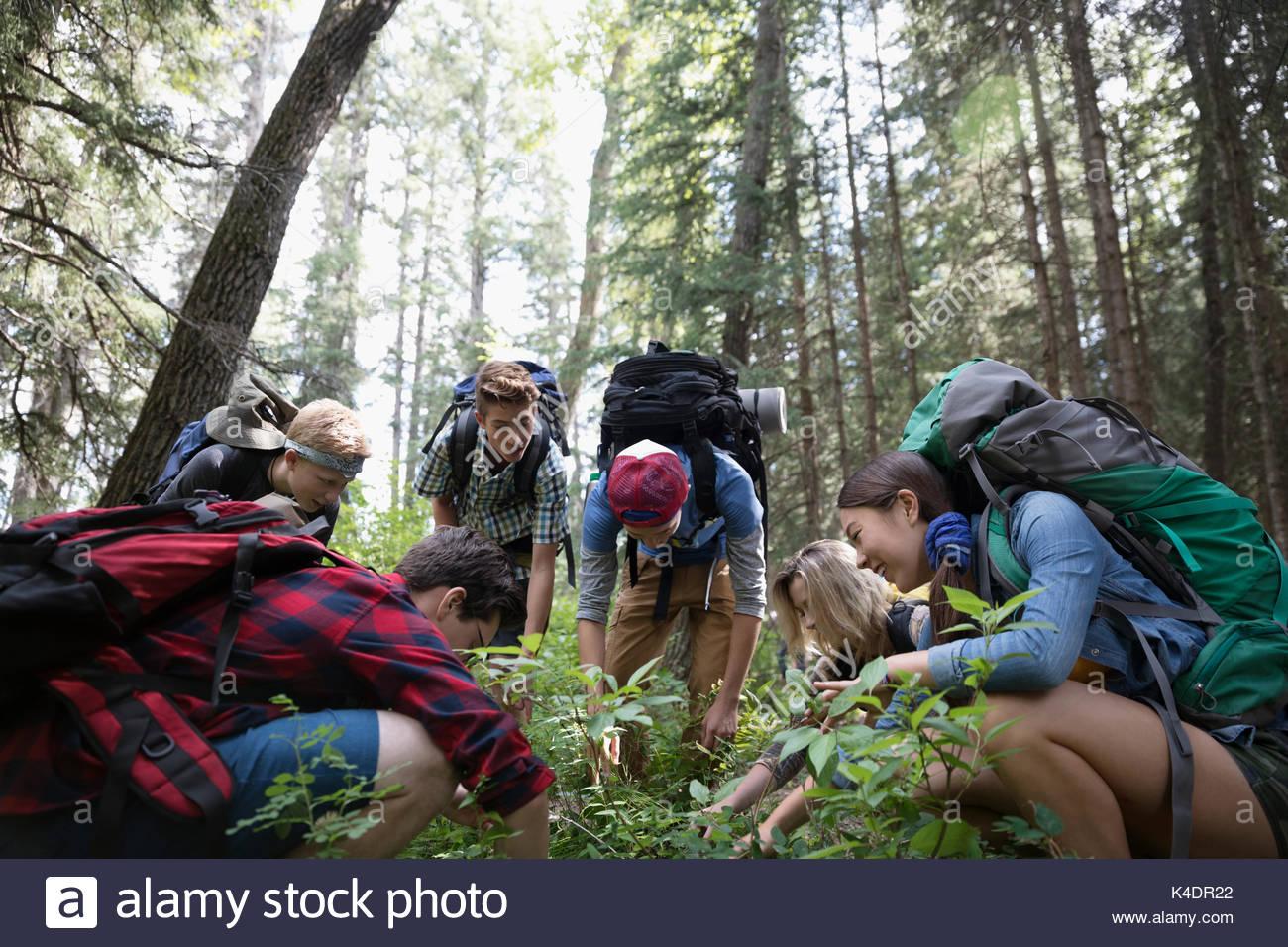 Teenage outdoor school students exploring undergrowth in woods - Stock Image