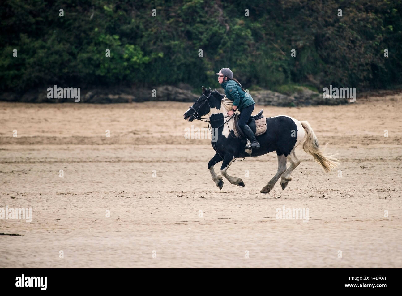 Gannel Estuary - a horserider riding along the exposed river bed at low tide on the Gannel River in Newquay, Cornwall. Stock Photo