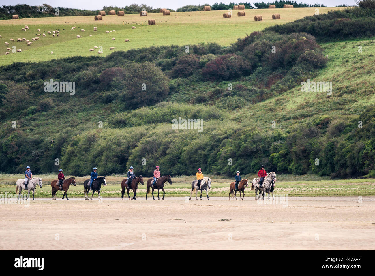 Gannel Estuary - pony trekking along the exposed river bed at low tide on the Gannel River in Newquay, Cornwall. - Stock Image