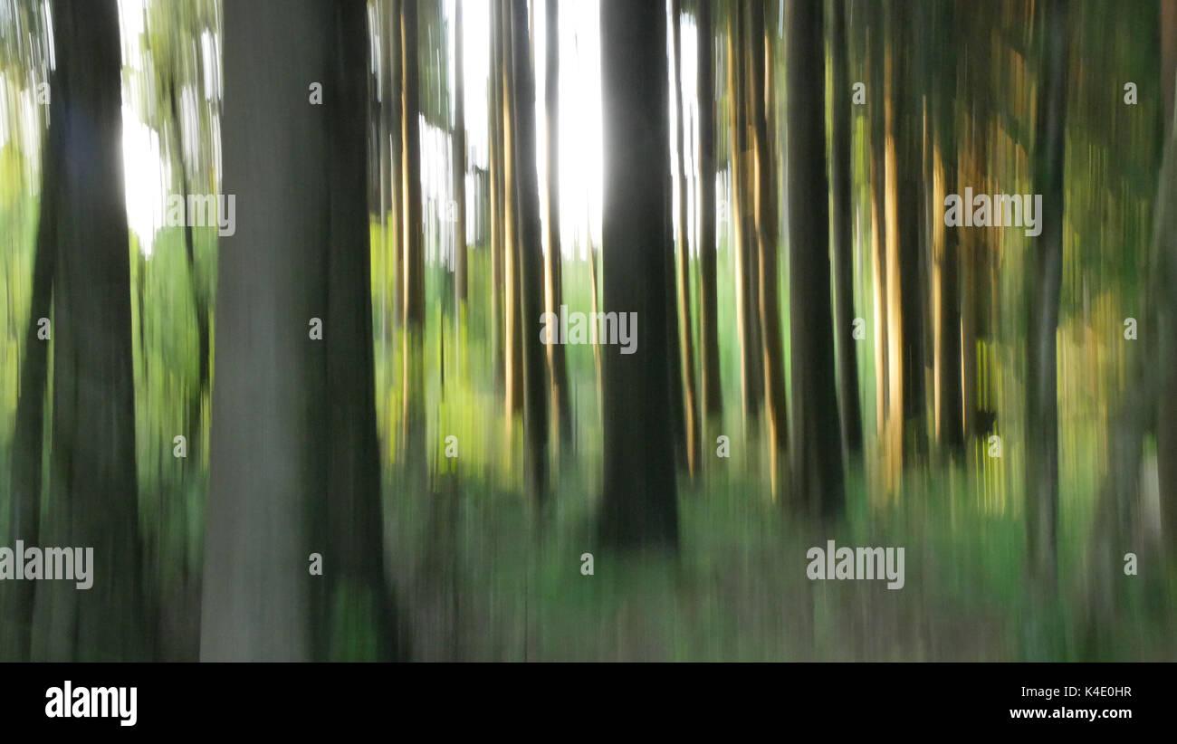 Wood In Black Moor, Rhoen, Softness Of Focus - Stock Image