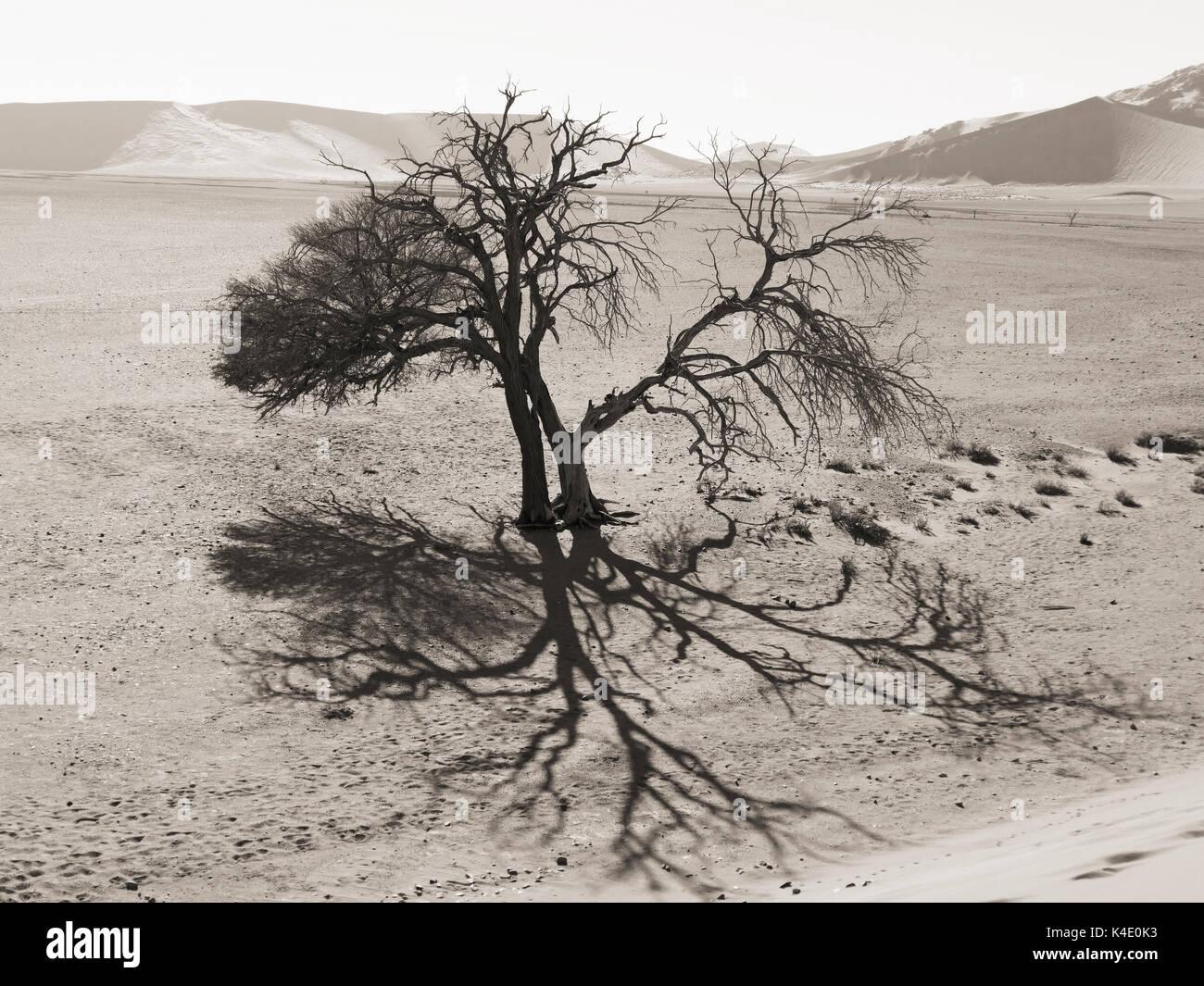 Sossusvlei, Bald Tree, Namib Desert - Stock Image
