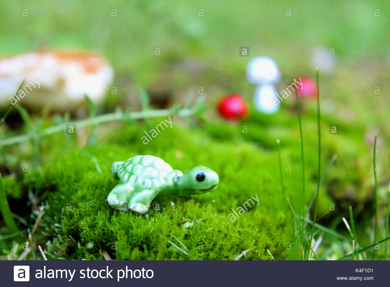 Mystical Forest with Turtle - Stock Image