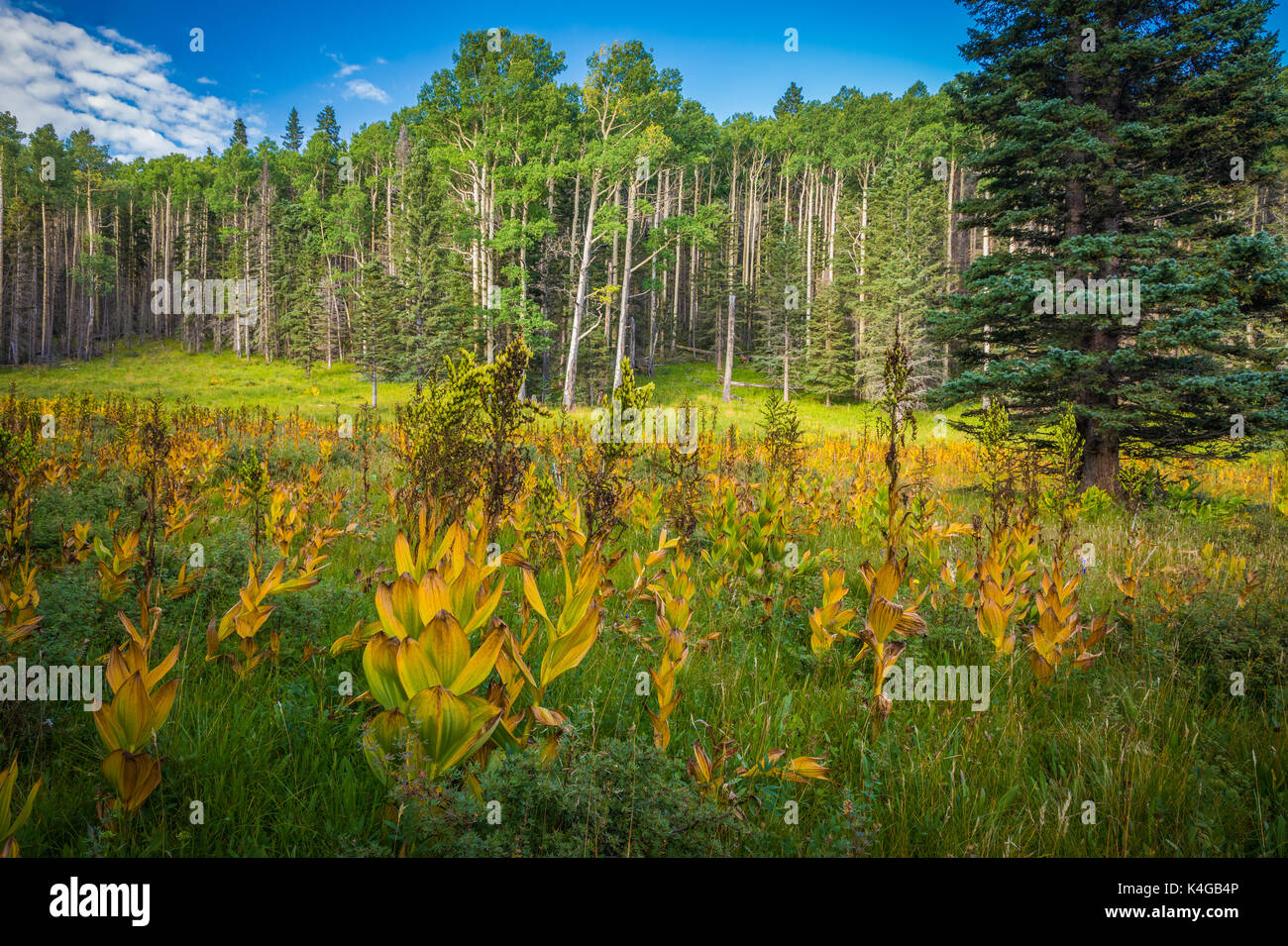 The Pecos Wilderness is a protected wilderness area within the Santa Fe National Forest and Carson National Forest. - Stock Image