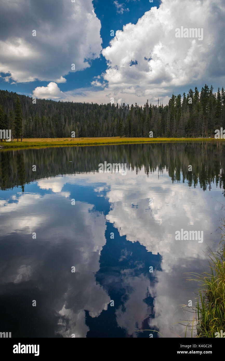 ThePecos Wildernessis a protectedwilderness areawithin theSanta Fe National ForestandCarson National Forest. - Stock Image