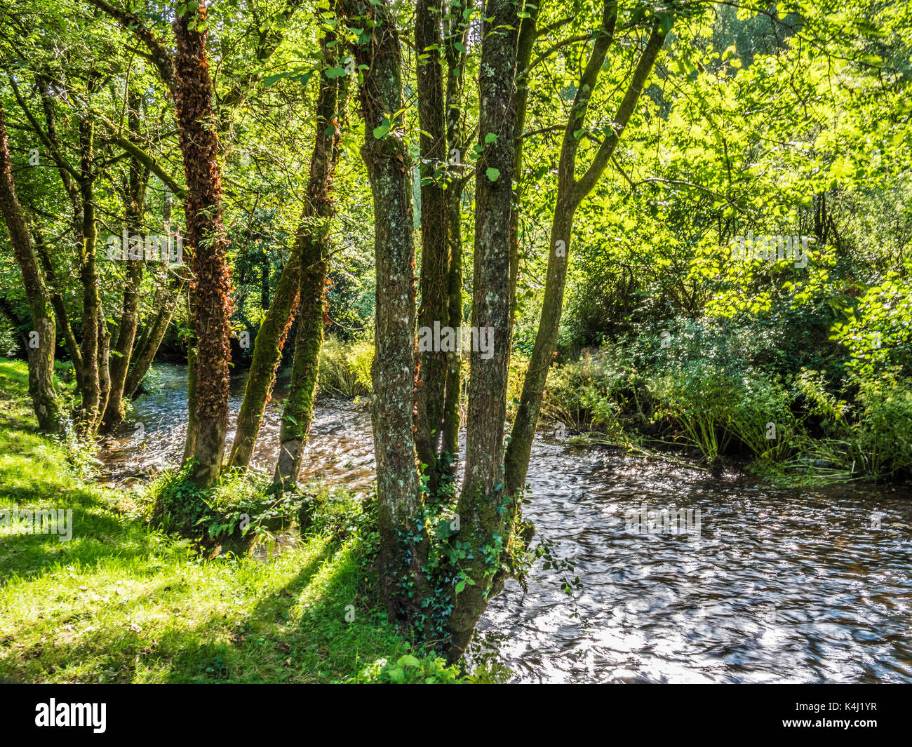 The River Exe in the Exmoor National Park, Somerset. - Stock Image