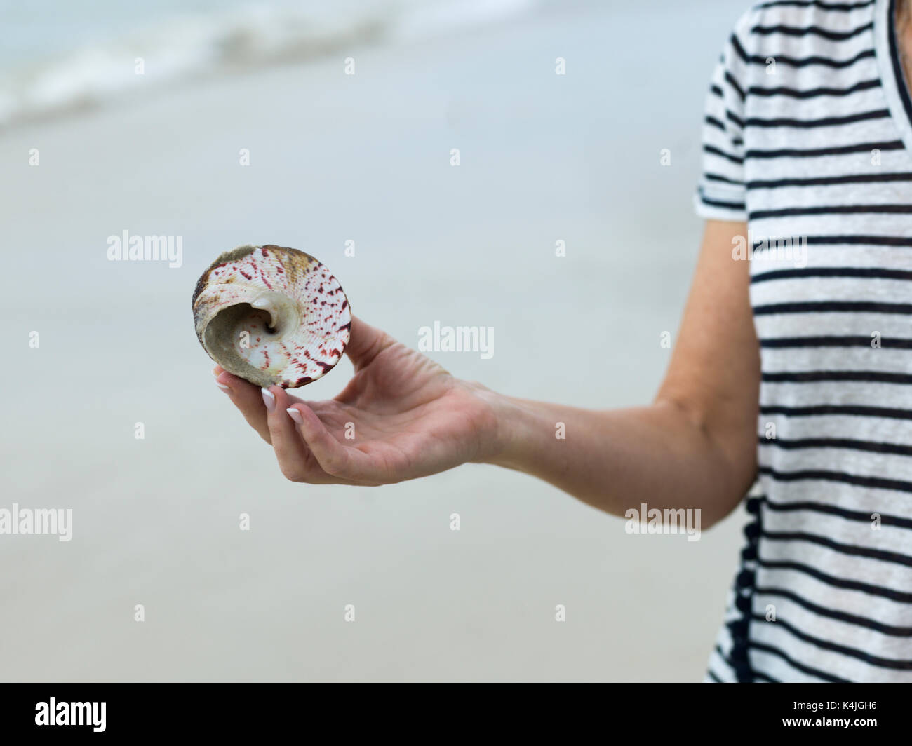 Close-up of person holding conch shell, Koh Samui, Surat Thani Province, Thailand - Stock Image