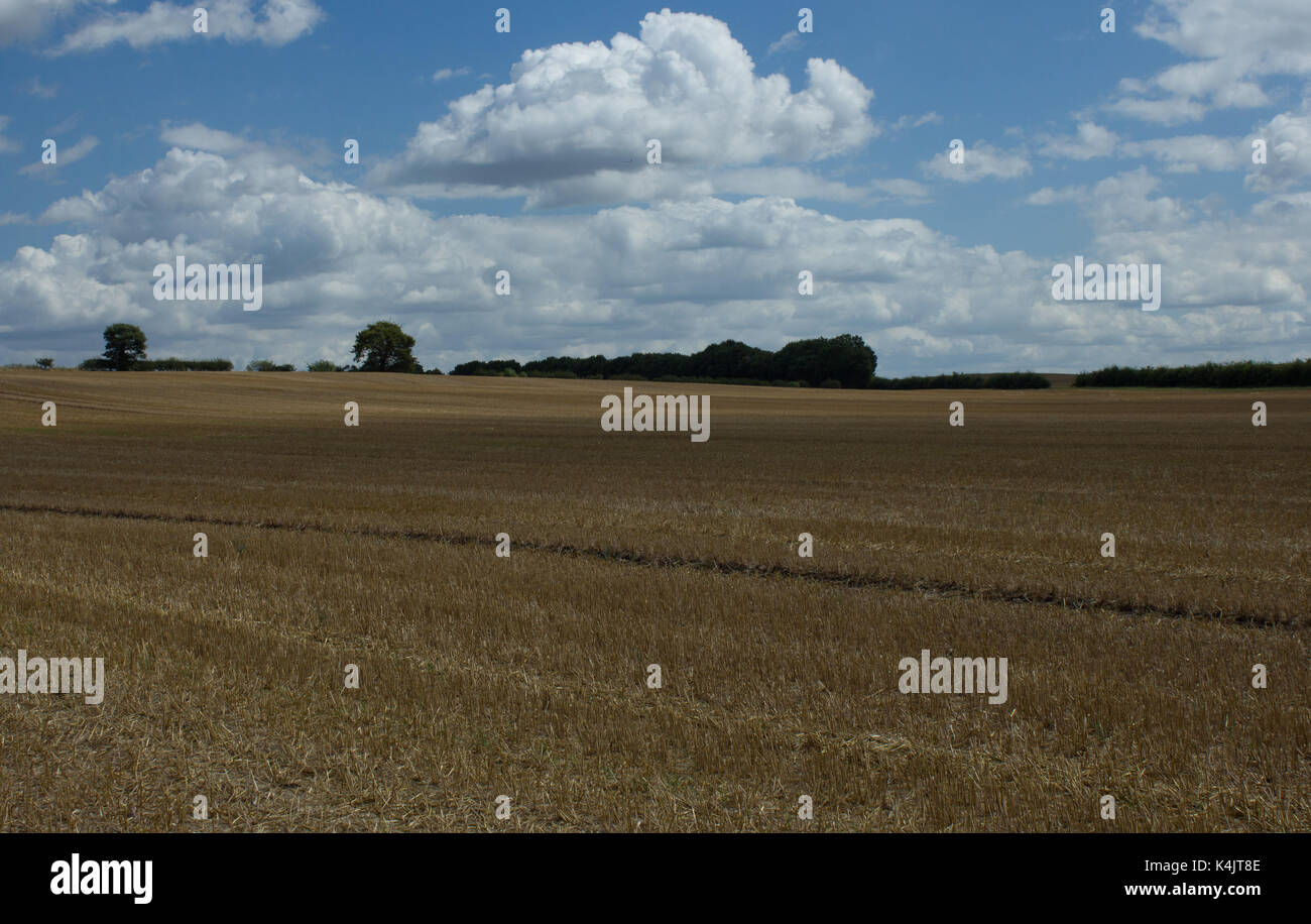 Crop is harvested - Stock Image