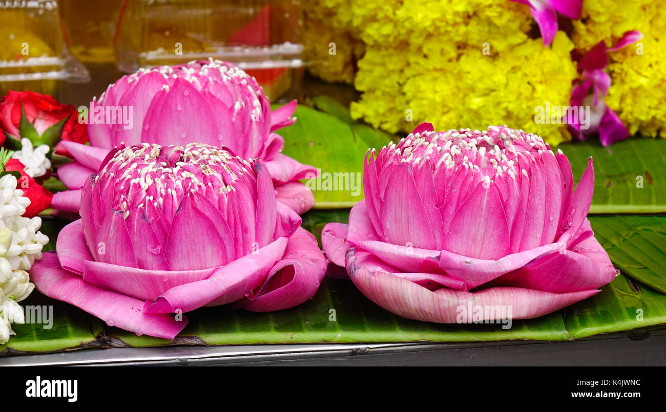 Lotus flowers for sale at hindu temple in bangkok thailand stock lotus flowers for sale at hindu temple in bangkok thailand mightylinksfo