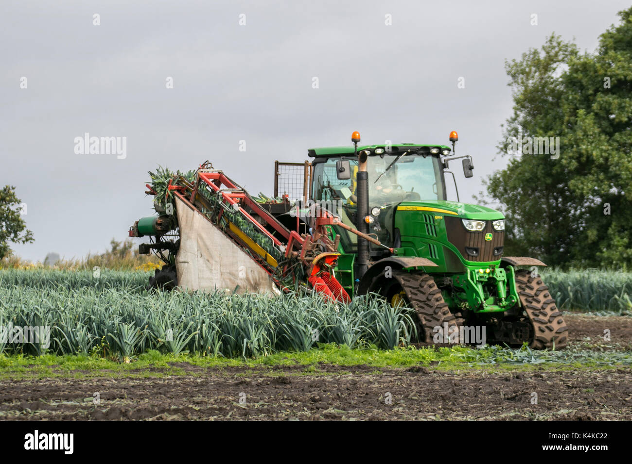 Burscough, Lancashire.  7th September, 2017. UK Weather. Drying conditions for harvesting leeks with a John Deere 6210R tracked automatic harvester, guided by satellite a form of autonomous technology. It is considered driverless because it can operate without the presence of a human inside the tractor itself. Like other ground vehicles, they are programmed to independently observe their position, decide speed and avoid obstacles such as people, or objects in the field, while performing their task whilst using GPS and wireless technologies to farm land. Credit; MediaWorldImages/AlamyLiveNews - Stock Image