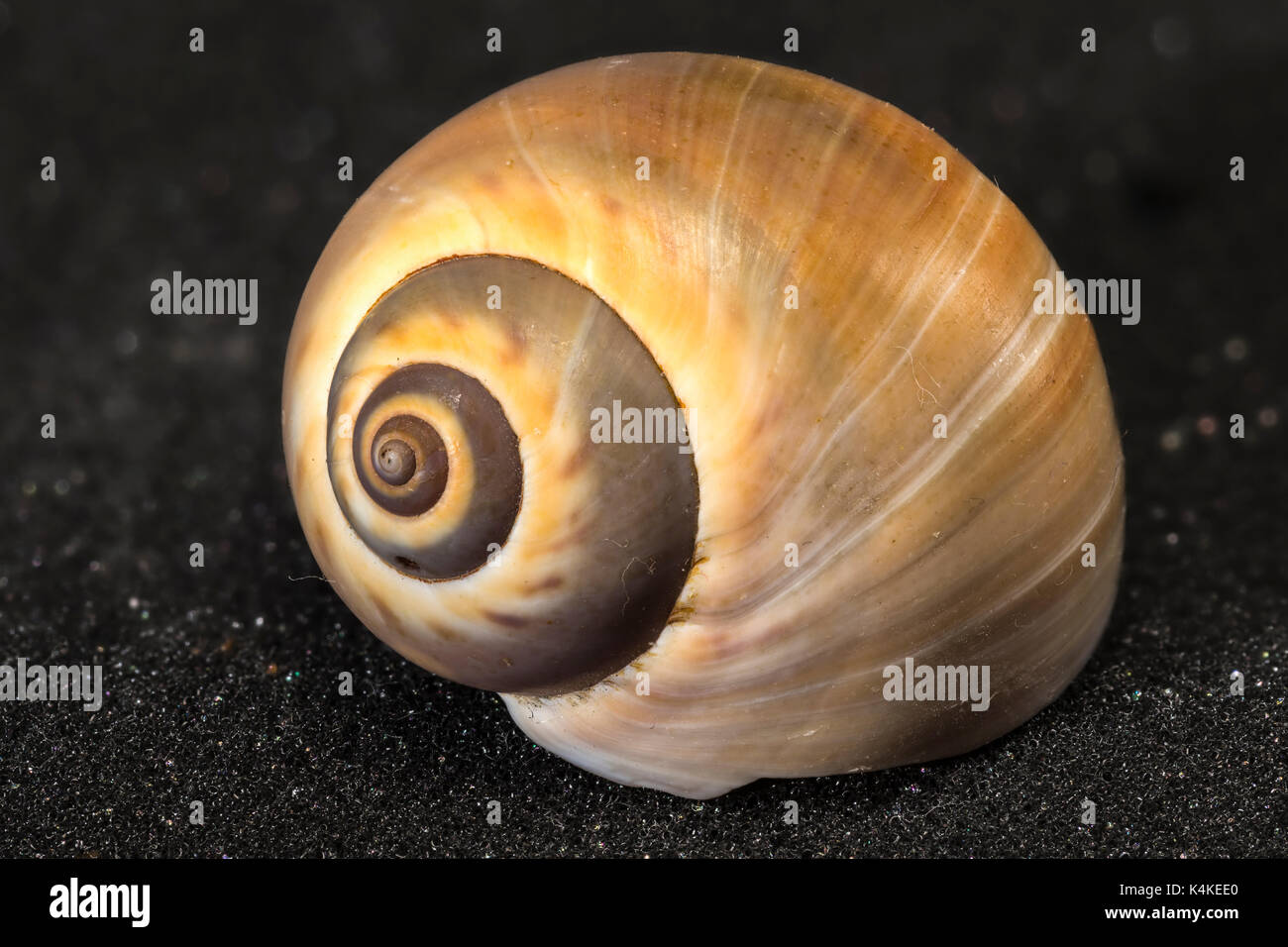 Snail house, free, Focus Stacking - Stock Image
