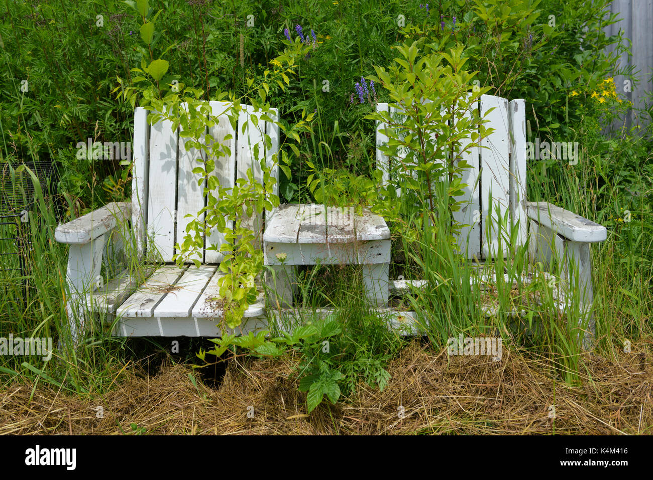 Old forgotten adirondack chairs. - Stock Image