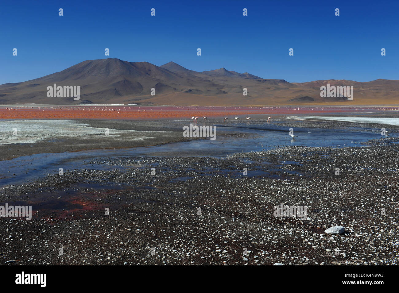 Laguna Colorada (red lagoon), Reserva de Fauna Andina Eduardo Avaroa, Southern Bolivia - Stock Image