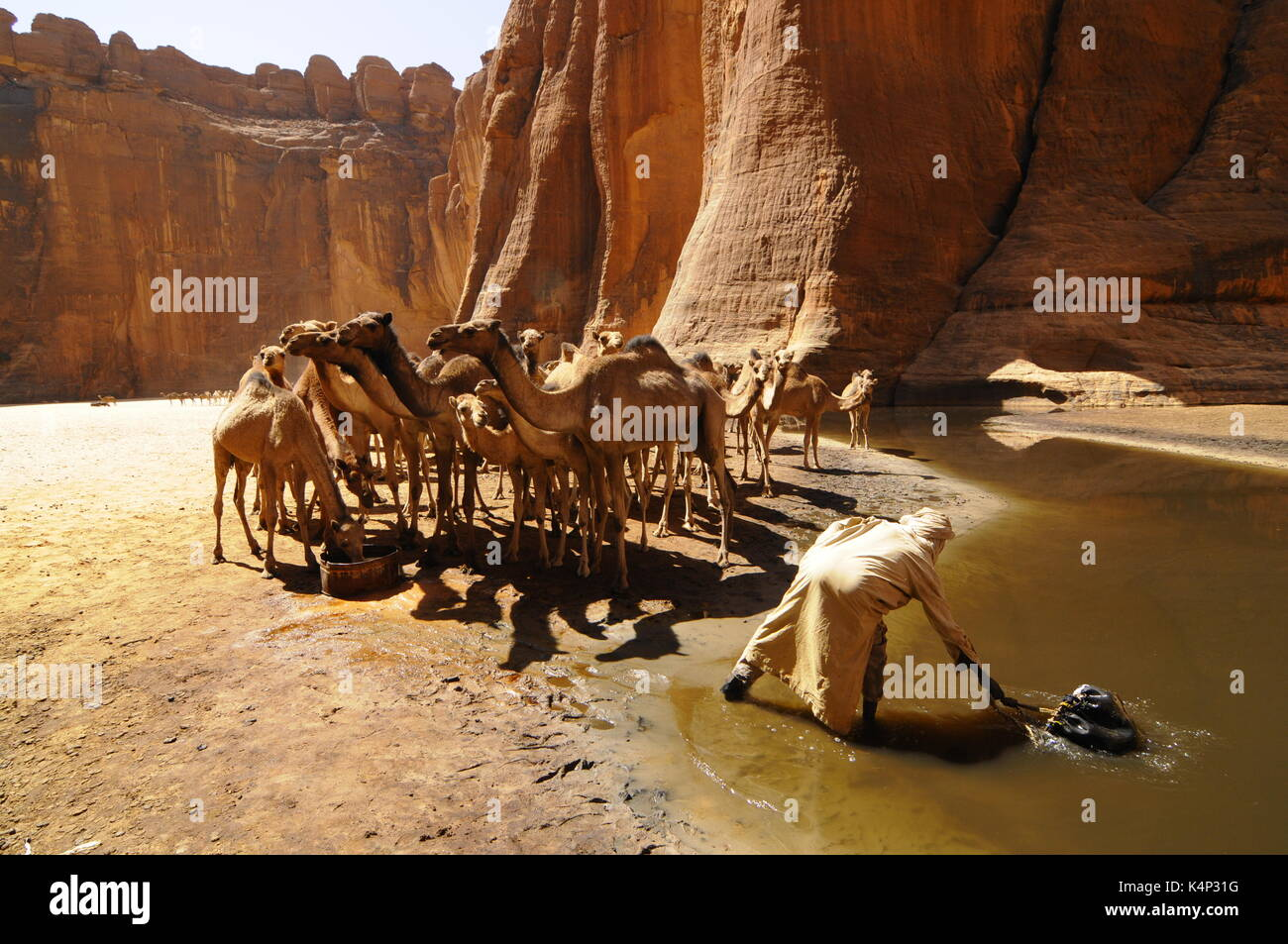 Camels in Guelta Archei, Chad, Africa - Stock Image