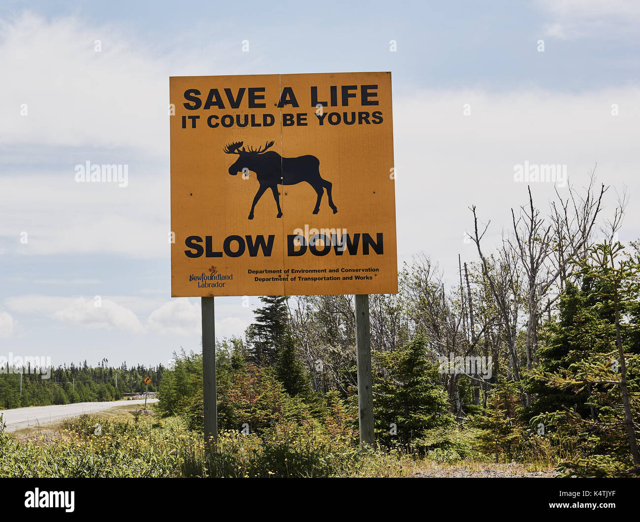 Sign warning drivers of danger of moose crossing the ...