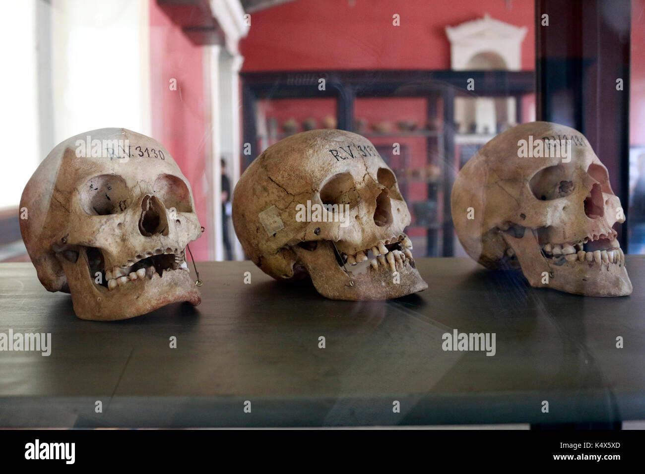 antikes Skelett, Berlin. - Stock Image