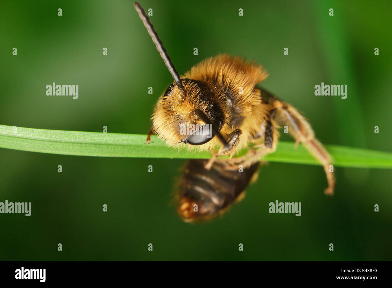 Mining Bee - Stock Image
