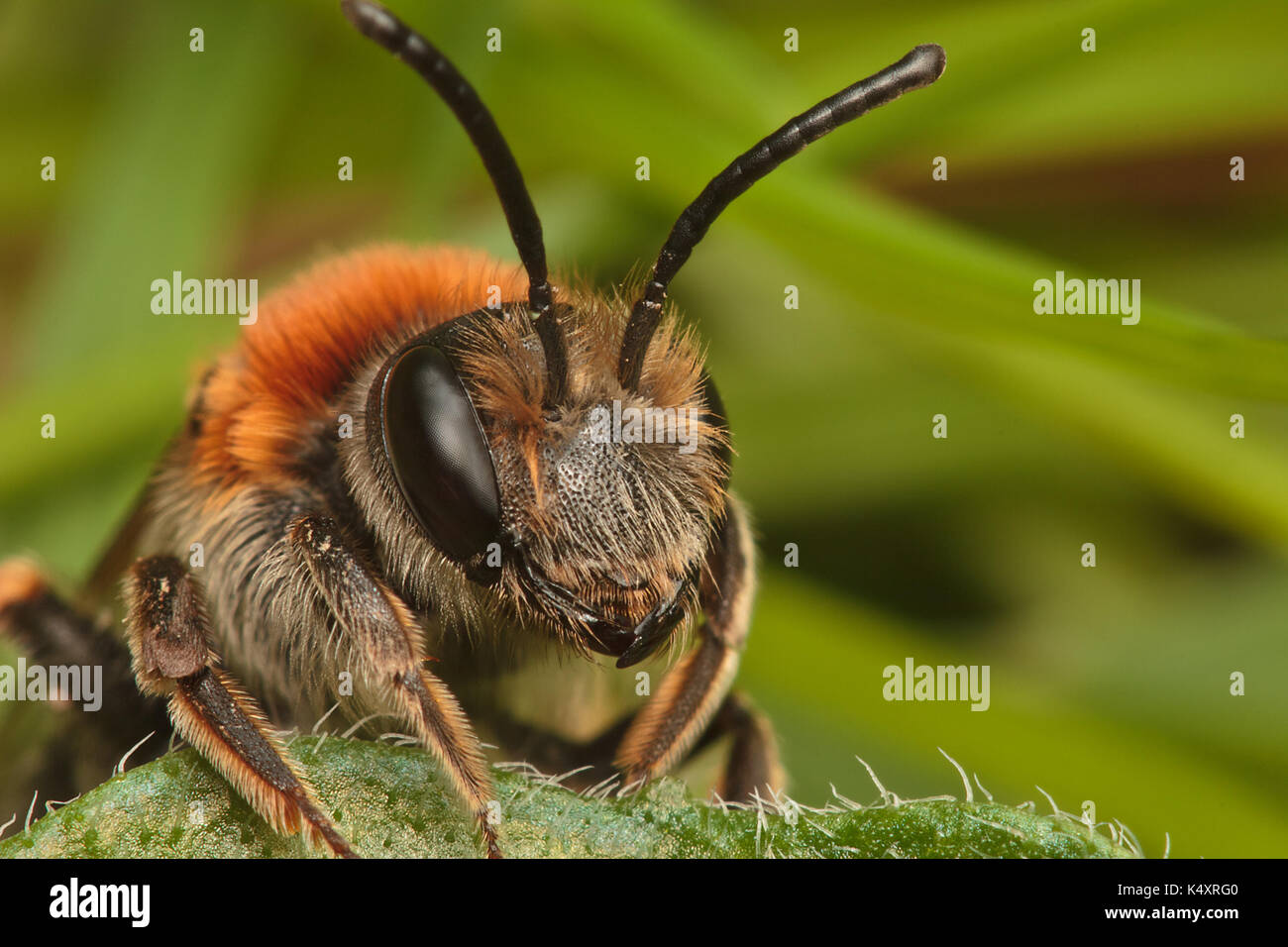 Mining Bee - Stock Image