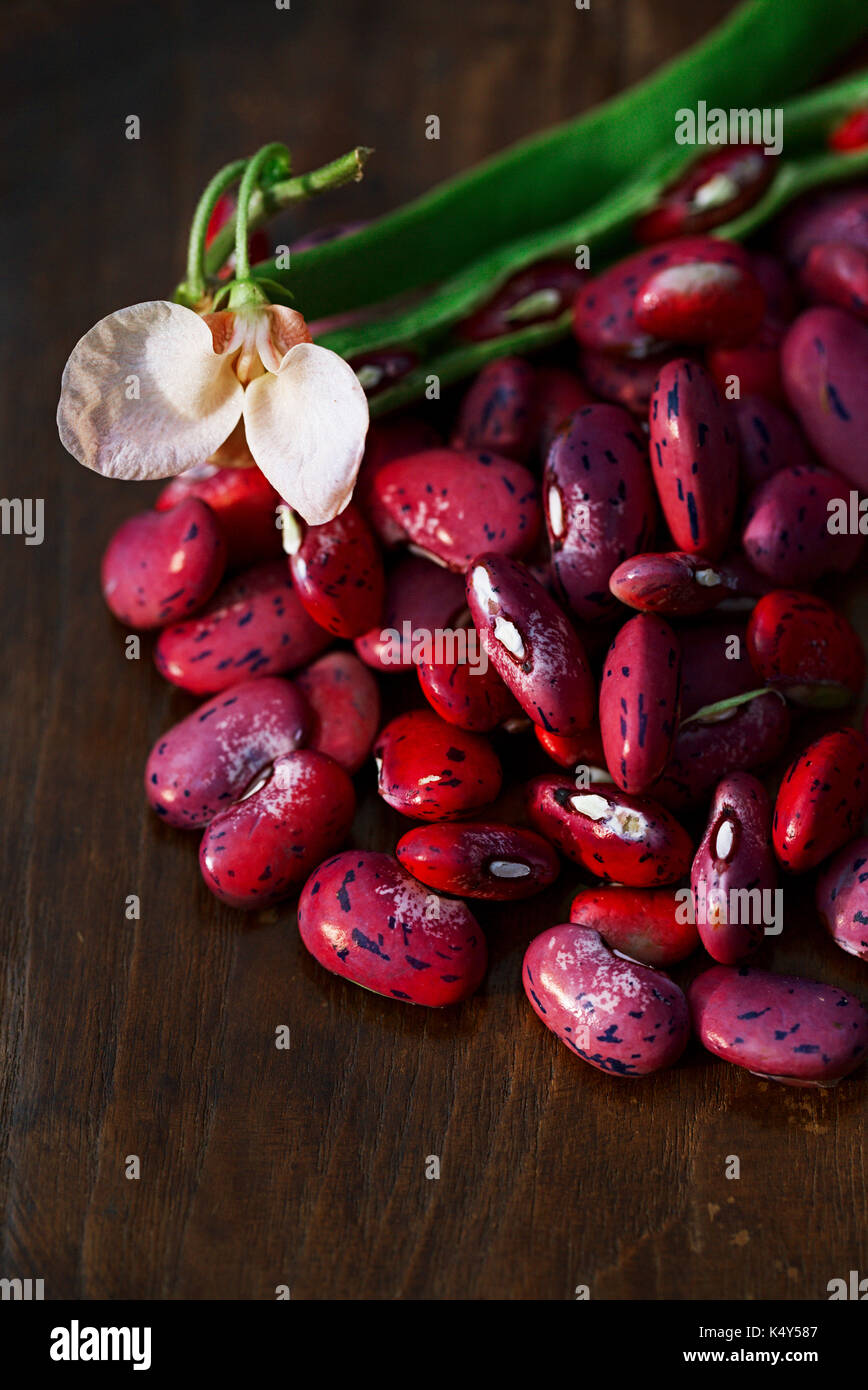 scarlet running beans - pod, flower and beans on wooden table - Stock Image